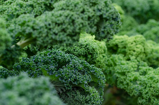 Kale- Best Vitamin C Rich foods in India